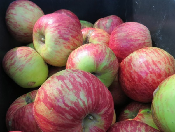 Loriendale Orchard: Apples That Taste As Apples Should