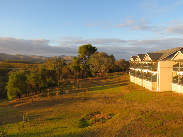 Sunrise at Novotel Barossa Valley