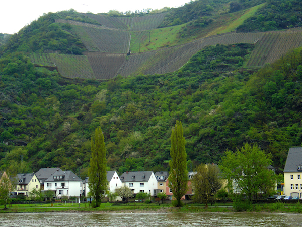 Vineyards on the Rhine River