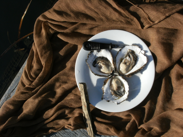Angasi Oysters, Ultimate Oyster Experience, Narooma Oyster Festival