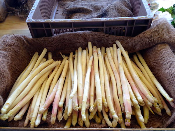 White asparagus at fresh food market at Conflans Ste Honorine on the Seine River in Paris