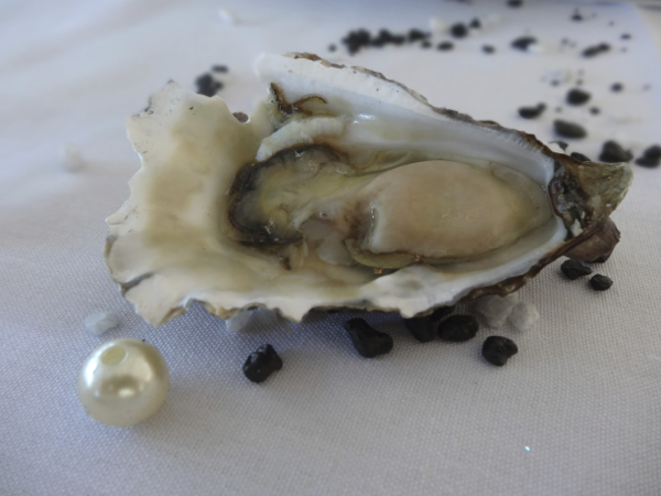 Oyster With Pearl, Australia's Oyster Coast