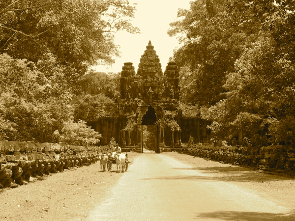 A snapshot in time: Buffalo cart near Angkor Wat, World Heritage-listed temple complex on the outskirts of Siem Reap.