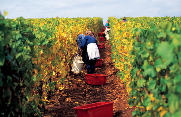 www.foodwinetravel.com.au Bill Peach Journeys Fine Wines of Southern Australian tour by private jet takes in the Tamar Valley, Coonawarra, the Barossa Valley and Mudgee.