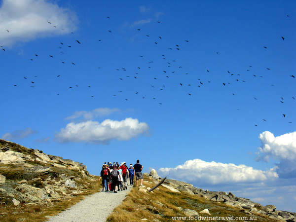 Celebrate Australia Day by taking a walk to the top of Mount Kosciuszko, Australia's highest point.