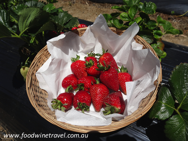 Berry Hill and a recipe for Strawberries in Rosé Jelly