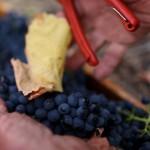 Ferngrove Wines Western Australia