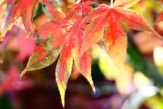 Autumn Breathe Breaks in Southern Queensland Country; autumn getaways in Toowoomba, Stanthorpe, Kingaroy and other parts of south east Queensland.