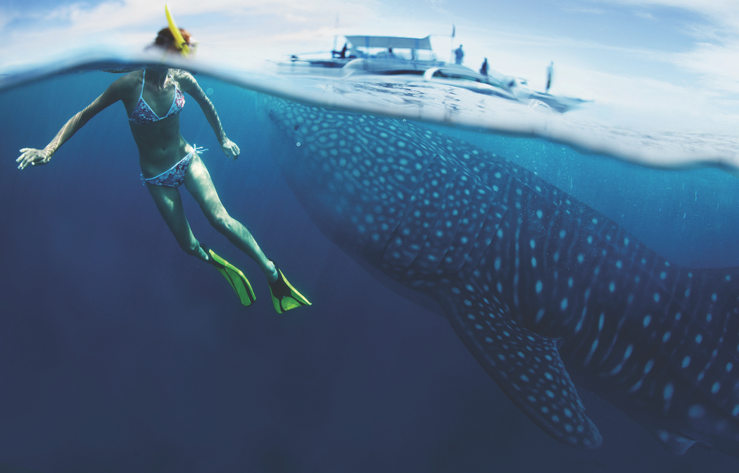 3 Whaleshark Utila by Dudarev Mikhail SS from Ultimate Wildlife Destinations