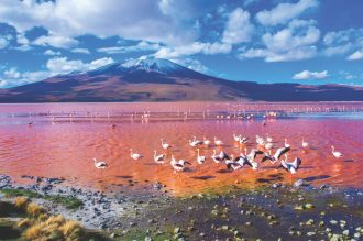 Ultimate Wildlife Destinations 73 Flamingos Atacama by Byelikova Oksana SS
