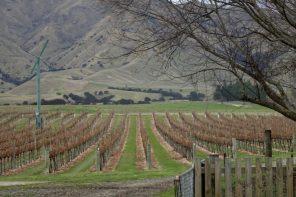 Catalina Sounds Vineyard Marlborough region New Zealand