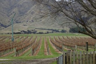 Catalina Sounds Vineyard Marlborough region New Zealand