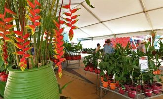 Ginger Flower and Food Festival, Ginger Factory, Yandina