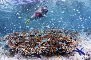 Indonesia Snorkeler on house reef_Walt Stearns