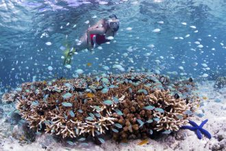 Indonesia Snorkeler on house reef_Walt Stearns