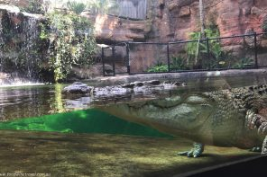 Wild Life Sydney Zoo Crocodile with eyes open