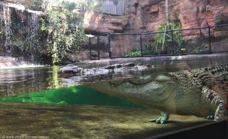Wild Life Sydney Zoo Crocodile with eyes open
