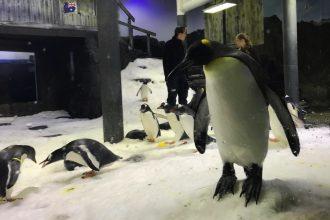 Wild Life Sydney Zoo Penguins