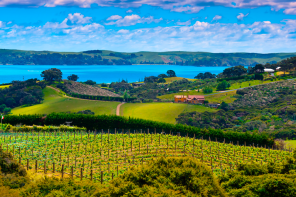 Waiheke Island, one of the highlights of The Golden Pig's Epicurean New Zealand tour.