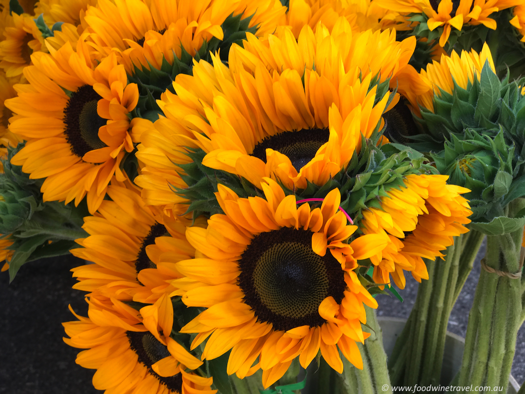 Solvang Farmers Market Sunflowers