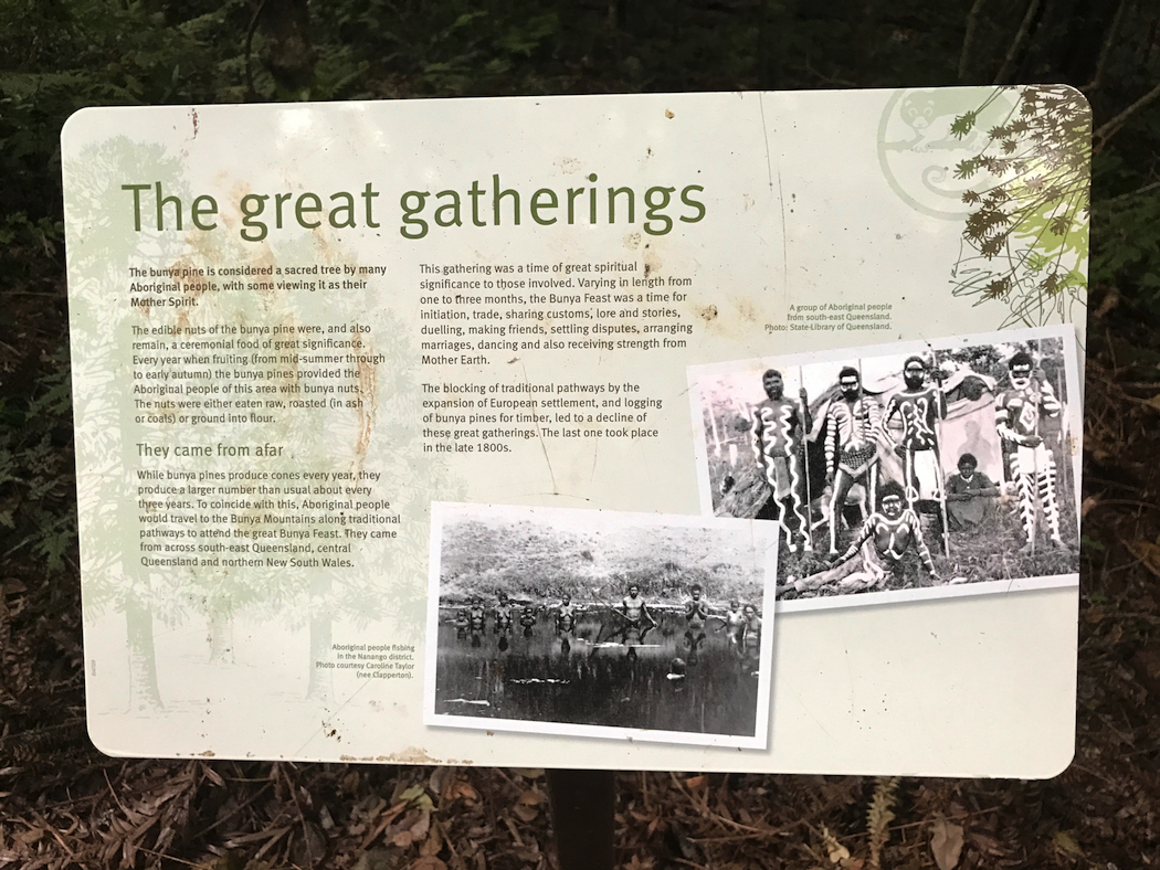 Bunya Mountains Aboriginal Gatherings-imp