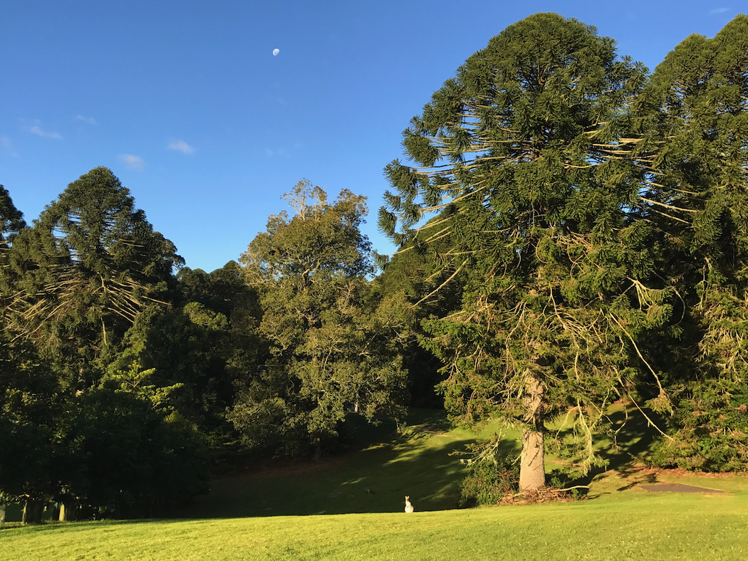 Bunya Mountains Birdsong Moon and View