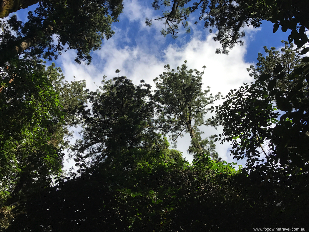 Bunya Mountains Roof Canopy-imp