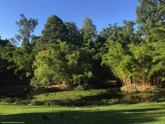 2018 March 15 Mount Coottha Botanic Gardens Brisbane Lagoon and bamboo