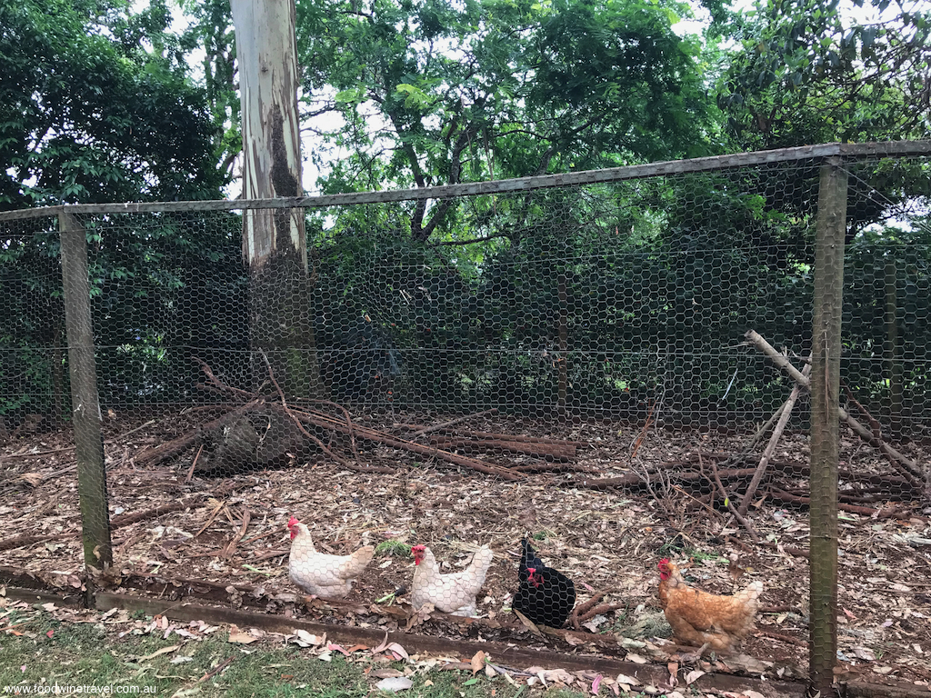 Tamborine Mountain Witches Falls Cottages Chook Pen