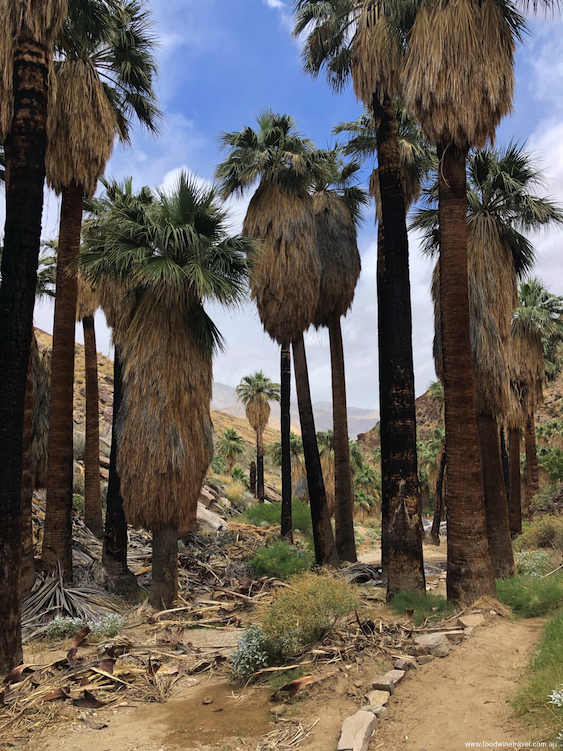 Hiking in the Indian Canyons just outside of Palm Springs.