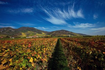 Vineyards in Wachau Valley © Austrian National Tourist Office / Photographer Himsl.