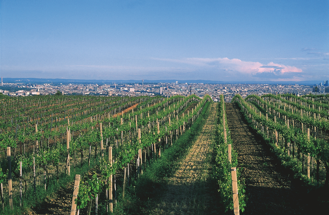 Vienna has a surprising number of vineyards within city limits. © Austrian National Tourist Office / Photographer Diejun.