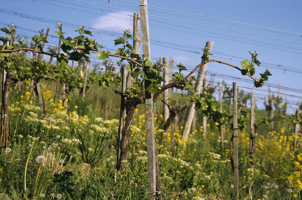 An exciting crop of dynamic young winemakers are taking Austrian wine to new heights. © Austrian National Tourist Office / Photographer Diejun.