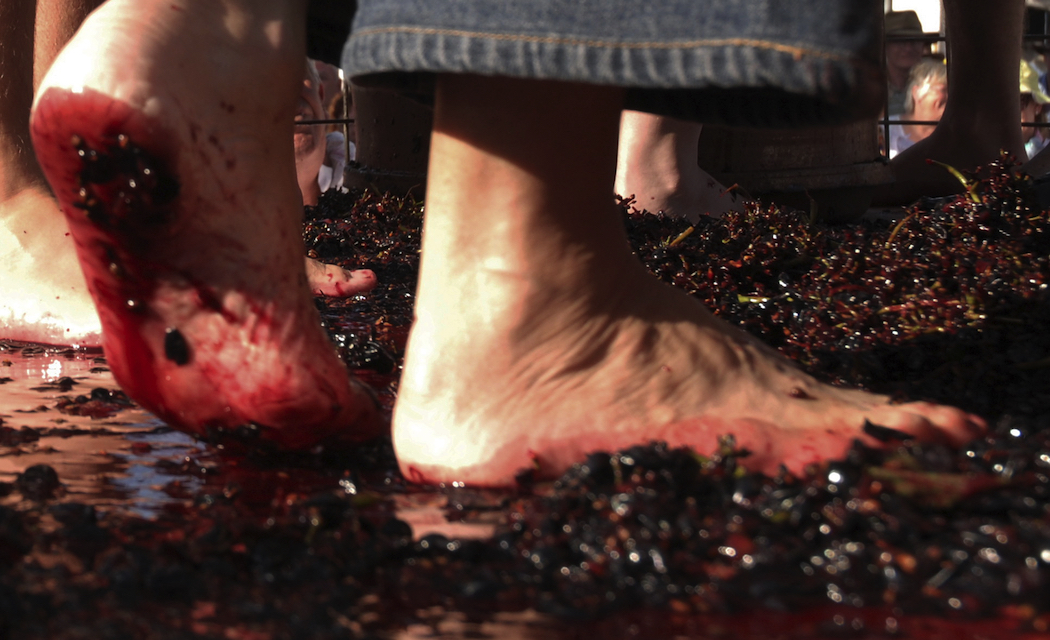 There's always plenty of foot-stomping grape crushing at the Stanthorpe Apple and Grape Harvest Festival.