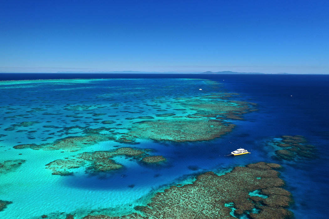 Coral Greenhouse is at John Brewer Reef, about 80 kilometres off the North Queensland coast.