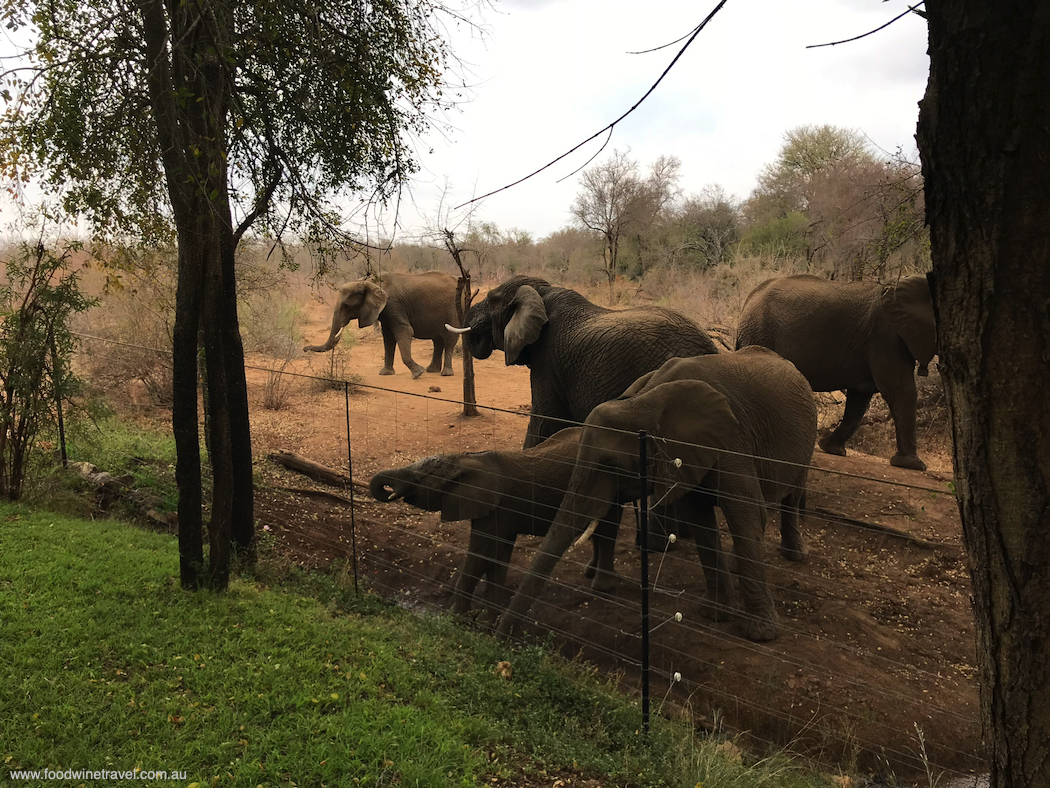 Elephants just metres from my suite at Jaci's Safari Lodge.