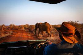 Elephants at Madikwe Game Reserve