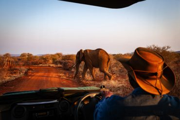 Elephants at Madikwe Game Reserve