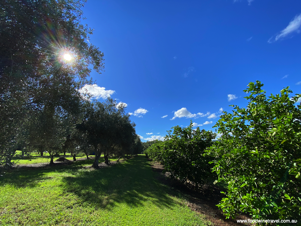 Watercress Creek olive and lime farm, one of the last remaining farms on Pine Mountain.