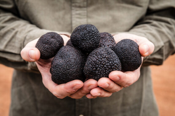 There's a good reason why truffles are often referred to as 'black diamonds'. Photo © Sarah Hewer.
