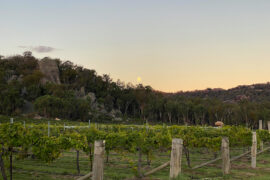 The moon rises over Balancing Heart Vineyard, now undergoing a major upgrade after being purchased by new owners Greg and Lee-Anne Kentish.