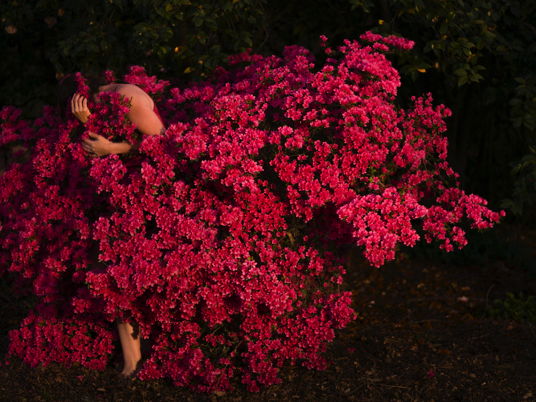 I wrap my face in her cloak of petals and breathe deeply, by Tamara Dean, to be displayed at Ngununggula, the Southern Highlands' new regional gallery. Image courtesy of the artist and Michael Reid, Sydney.